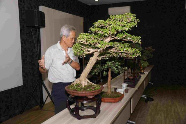 CHA Bonsai Appreciation 2016